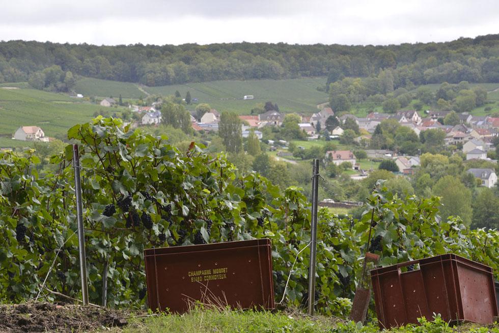 Cormoyeux, vignoble de Champagne